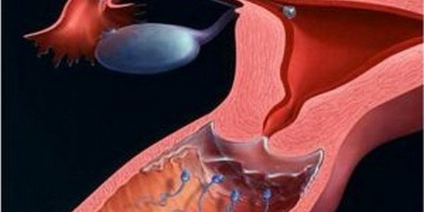 Nữ giới bị tắc ống dẫn trứng trứng có rụng không