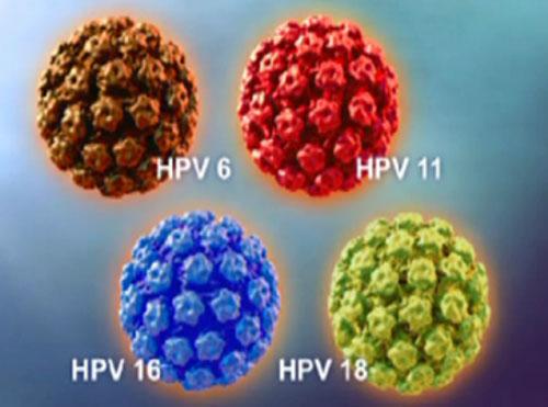Phân loại virus papilloma