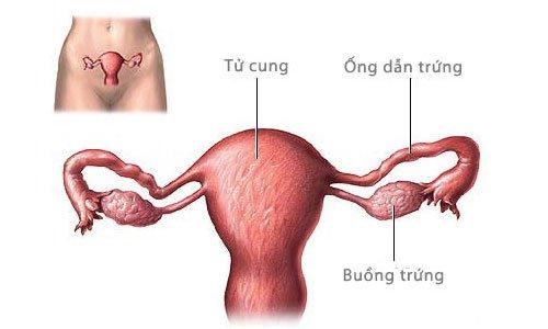 Vai trò của chụp tử cung vòi trứng
