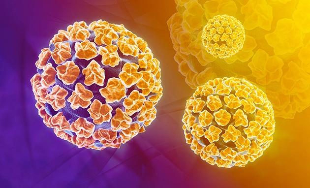 Virus papilloma là gì